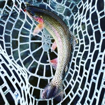 The rubber mesh netting on a Bitterroot Nets Stream Net cradling a Rock Creek rainbow trout.